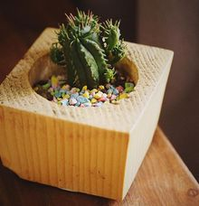 Pena Kaktus  by Antar Pena