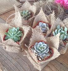 Succulent & Cactus Rustic souvenirs by Book.Idea