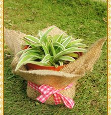 Plant Wedding Favor by Greenary Souvenir Tanamanku