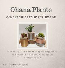 Credit card installment by Ohana Plants